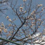 桜咲く🌸🤗